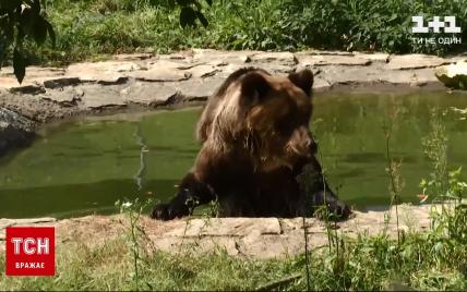 У ведмежому притулку поблизу Львова з'явилась нова клишонога жителька: відео