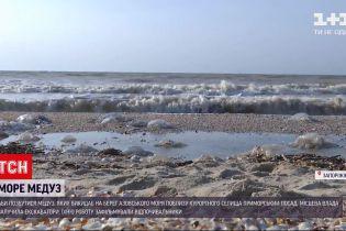 Новости Украины: как в курортных городах спасаются от нашествия медуз
