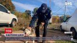 Новости Украины: копы помогли вернуть домой собаку, попавшую в ДТП вместе с хозяином