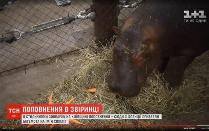 В зоопарк на Киевщине привезли бегемота из Франции: для него строят специальний бегемотариум
