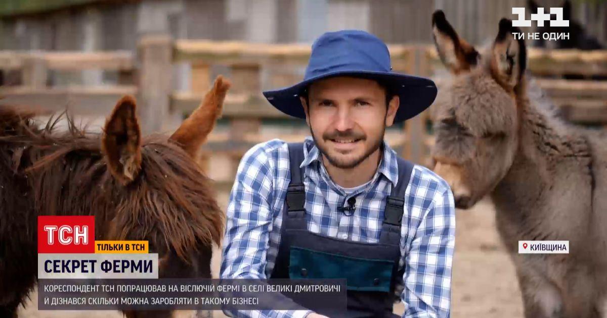 """Спецпроєкт """"Секрет ферми"""": на чому заробляють власники єдиної в Україні віслючої ферми"""
