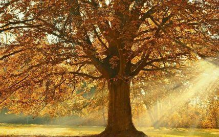 Народні прикмети, обряди і звичаї 13 жовтня