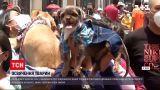 Новости мира: в Перу верующие вновь начали освящать домашних животных