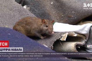 Новини України: середмістя Одеси атакували щури