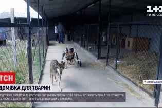 Новини України: подружжя з Миколаївської області рятує тварин від людської жорстокості