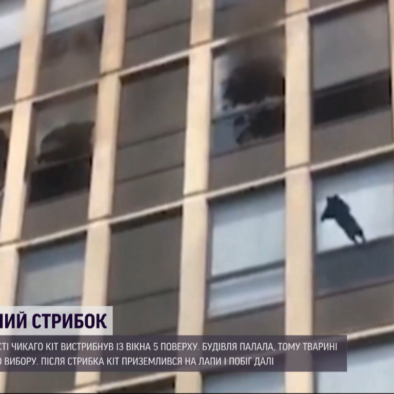 В США кот, спасаясь от пожара, выпрыгнул с пятого этажа и приземлился на лапы