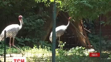 Верблюды, пони, дикобразы и хищные птицы поедут из Одесского в Тбилисский зоопарк