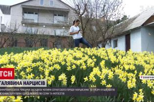 Новини України: вінничанка засадила город нарцисами