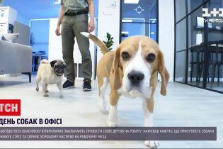 """Новости Украины: """"Возьму собаку на работу"""" - кто из сотрудников """"1+1"""" привел в офис своего любимца"""
