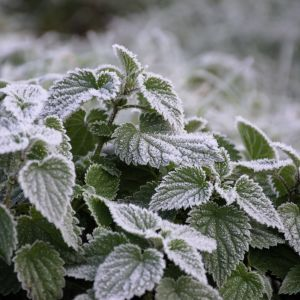 Заморозки і потепління: у Гідрометцентрі розповіли, якою буде погода в Україні до кінця травня