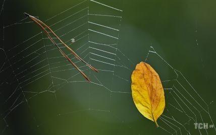 Названы четыре знака, которым этой осенью улыбнется удача