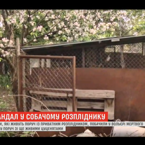 В Виннице в питомнике обнаружили тела мертвых собак: соседи жалуются на вонь