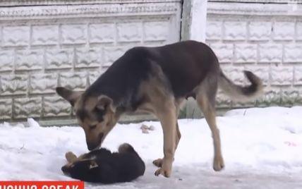 Собак у Миколаєві атакує смертоносний паразит, який передається людині