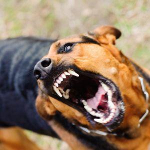 Вулицями Миколаєва бігав скажений собака, який покусав вісьмох людей