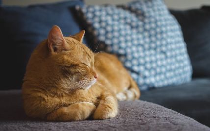 В Іспанії кіт увімкнув музику на всю гучність та ледве не довів сусідів до божевілля