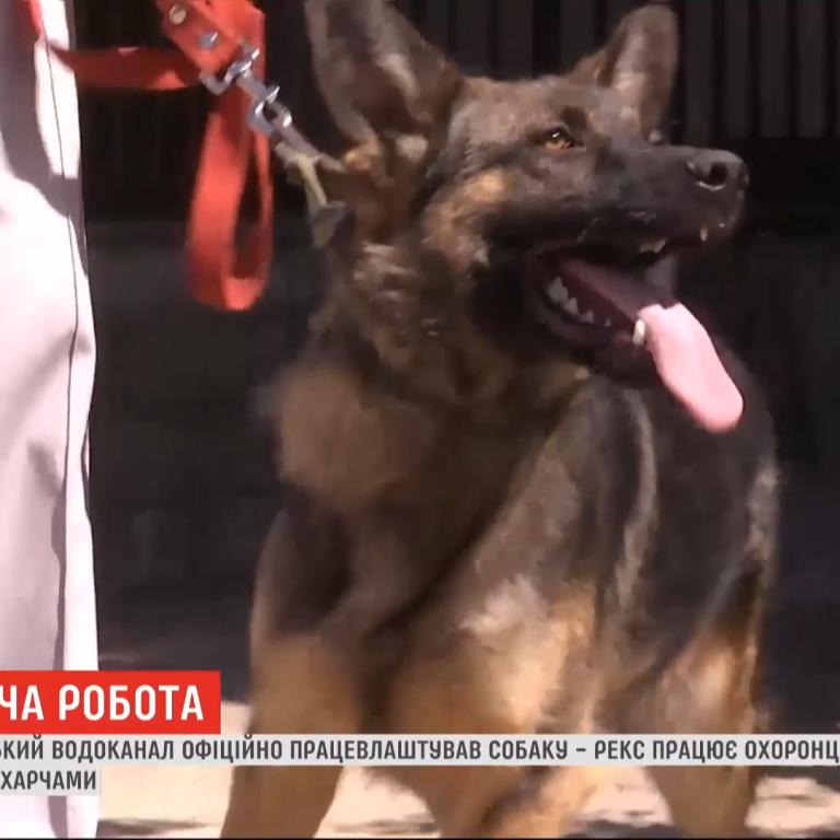 Херсонський водоканал офіційно працевлаштував на роботу пса