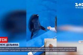 Новости Украины: мать мальчика, которого укусил дельфин, не будет предъявлять претензии к дельфинарию