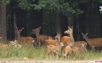 У Житомирській області мисливське господарство тримає в неволі диких тварин - екологи виявили, що незаконно