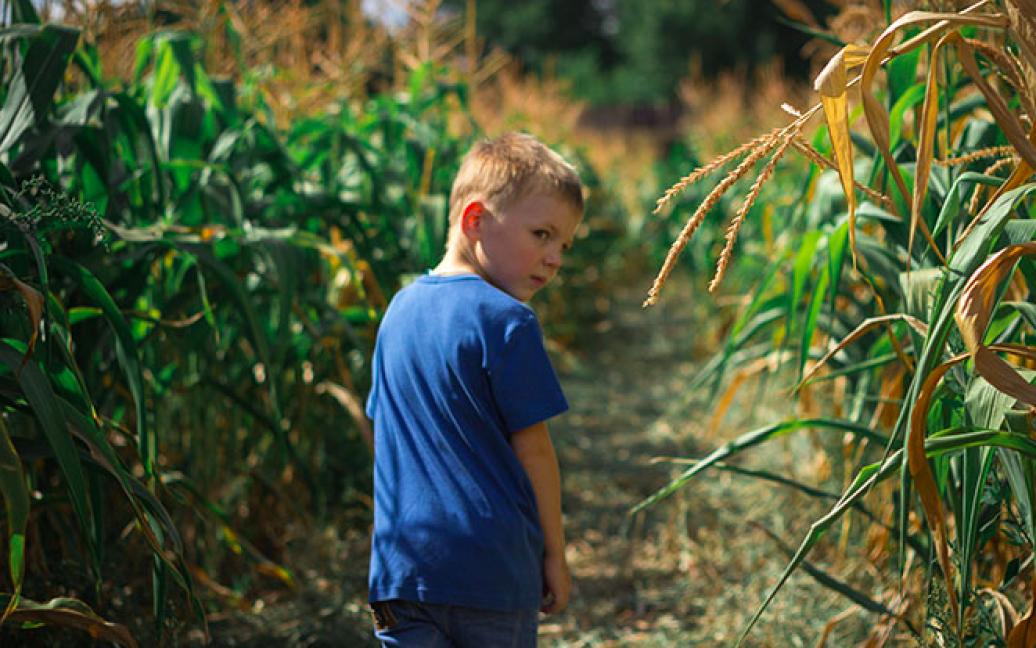 Лабиринт в кукурузе — это традиционная американская забава, которая проводится чуть ли не в каждом штате на фермах накануне праздника урожая. / © hmarochos.kiev.ua
