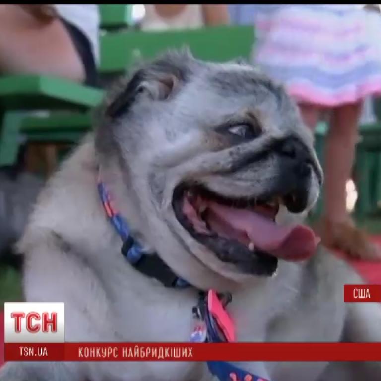 Найпотворнішим собакою у світі визнано Рембо