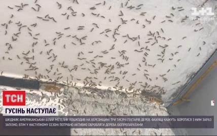 В Херсонской области нашествие гусениц уничтожило тысячи насаждений деревьев и добралось к многоэтажкам