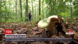 Новини України: в Вінницькій області 5 дітей отруїлися грибами - дві дівчинки померли у лікарні