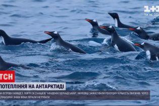 """Новини світу: біля станції """"Академік Вернадський"""" зафіксували рекордну кількість пінгвінів"""