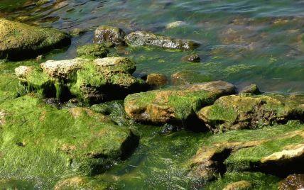 """""""Зеленая каша"""": туристы показали ужасное море в Одессе"""