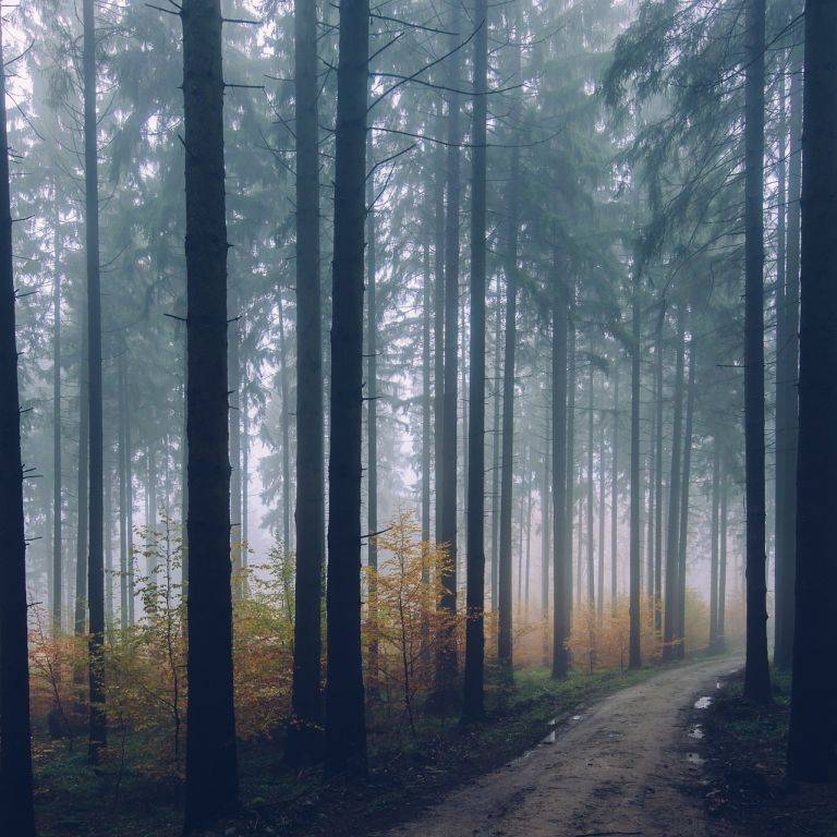 """Запуск проєкту """"Зелена країна"""" від Зеленського: де і як почнуть висаджувати мільярд дерев"""