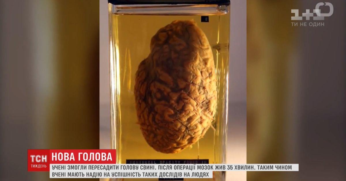 Ученым удалось восстановить мозг умершей свиньи
