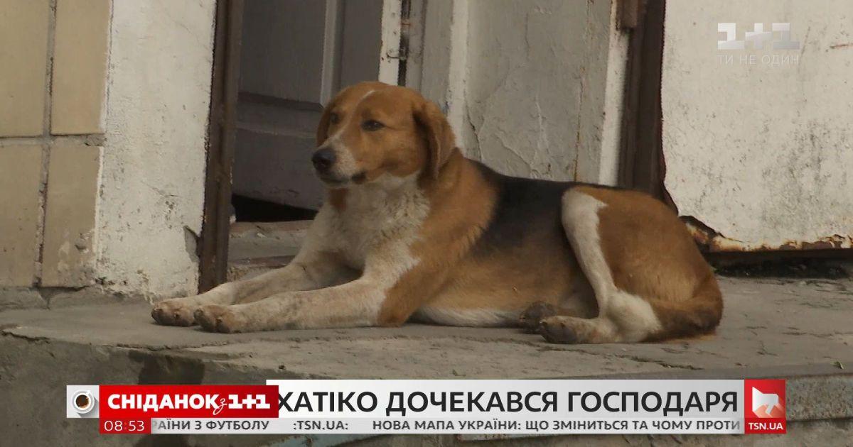 Украинский Хатико наконец нашел семью
