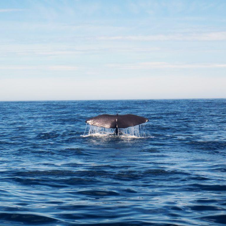 Шукали ядерну зброю — натрапили на китів: вчені знайшли нову популяцію тварин
