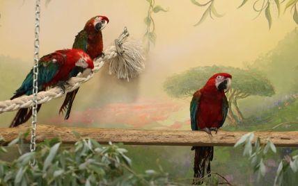 С горсовета — в зоопарк: в Харькове попугай, который принадлежал Геннадию Кернесу, стал переселенцем