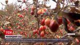 Новости Украины: кизиловый сад в Запорожской области внесли в Национальный реестр рекордов
