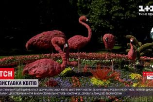 Новости Украины: в центре Киева появились дикие животные целых пять метров в высоту