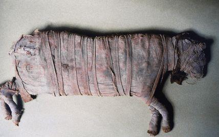 В Египте обнаружили загадочную мумию, которая меняет представление о цивилизации