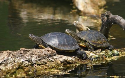 Нашествие черепах в Запорожье: у пресмыкающихся в парке произошел бэби бум