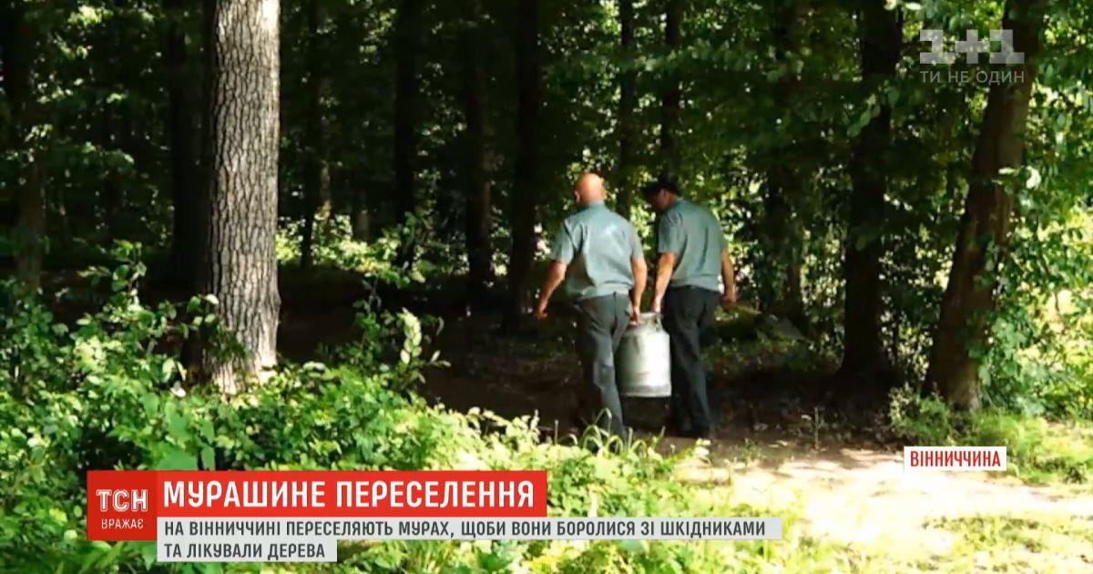 В Винницкой области испытывают новый метод борьбы с вредителями