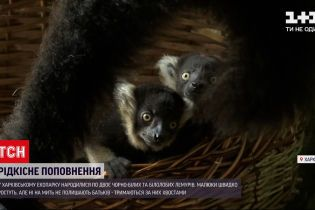 Новини України: рідкісне поповнення в харківському екопарку – там народилися лемури