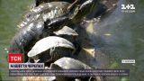 Новини України: центральний парк Запоріжжя проживає черепашачий бебі-бум
