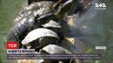 Новости Украины: центральный парк Запорожье переживает черепаший бэби-бум