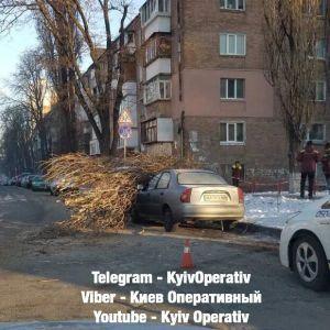 В Киеве на припаркованные авто упало дерево