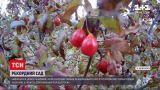 Новини України: кизиловий сад у Запорізькій області визнали найбільшим у країні