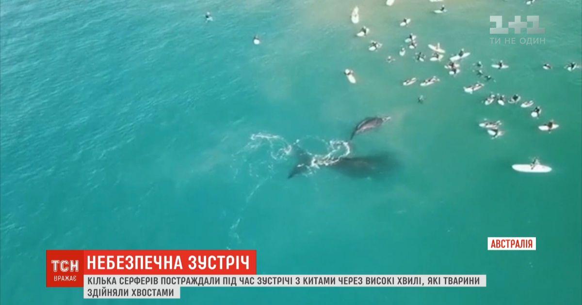 Неосторожные киты: в Австралии пострадали серферы во время встречи с морскими гигантами