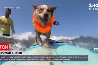 Новини світу: у Південній Каліфорнії хвилі підкорюють десятки собак найрізноманітніших порід