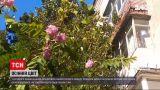 Новости Украины: в Виннице зацвела акация, но цветение уже повредил заморозок