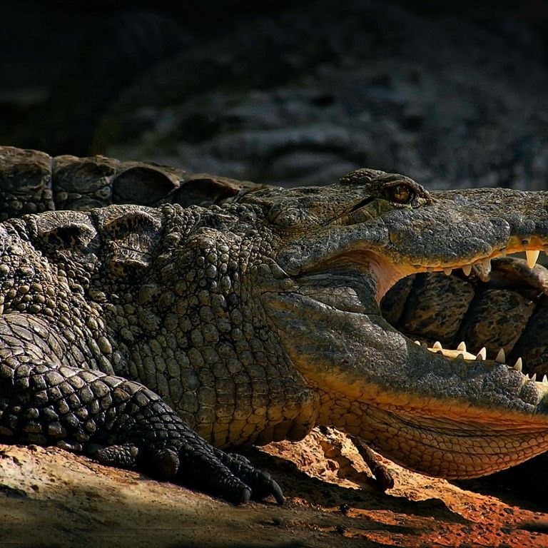 На популярном украинском курорте под Запорожьем нашли останки крокодила