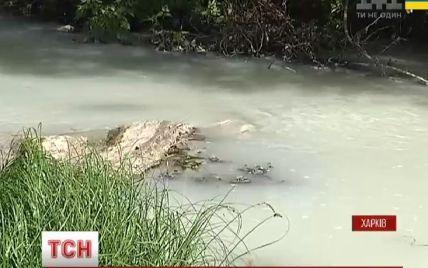 На Харківщині річка стала білою – фахівці попереджають про екологічну катастрофу