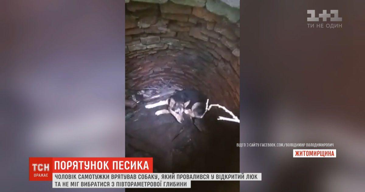 Мужчина самостоятельно спас пса, который провалился в открытый люк