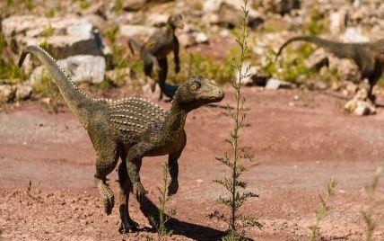 Рога или шипы на теле усложняли процесс: ученые выяснили, как спаривались динозавры